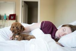 Pillowtex Firm Premium Polyester Pillow -Good For Side Sleep